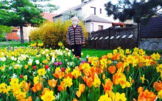 Květinové záhony – nové trendy v městských výsadbách